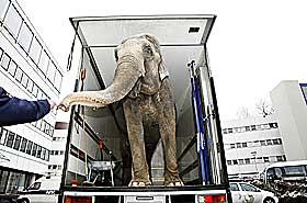 MARIENLYST: Kringkastingsbygget i Oslo er oppført like før krigen. Det er kledd med Støren-granitt, og er like pent i dag. Her er en elefant fra Cirkus Arnardo på besøk.