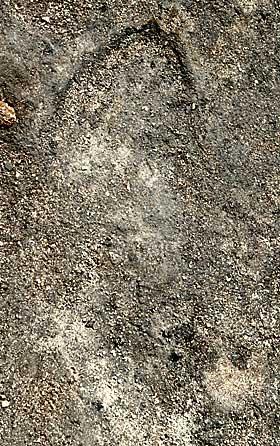 VIKINGFOTSPOR: F�rsteamanuensis Dagfinn Skre har funnet fotspor i Kaupang som trolig stammer fra 800-tallet.