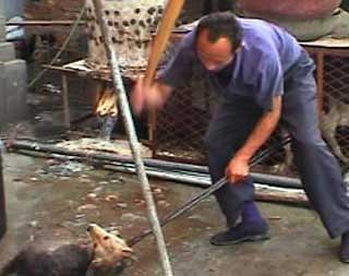 SLÅS I HJEL: Flere hunder ble drept ved gjentatte slag.