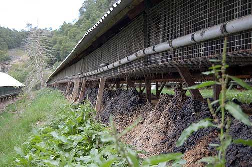 KOMMER UANMELDT: Dyrevernerne melder ikke sin ankomst før de står på trappa.