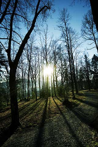 VAKKERT: Tsjekkia er mye, mye mer enn Praha. Skogen rundt Prasily er både vakker og trolsk.